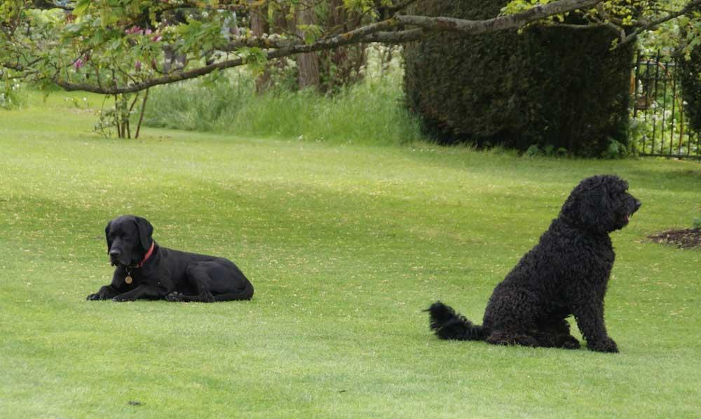 Dog-Friendly-Landscape-Design